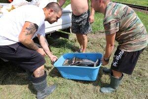 Rybári pri zbere mŕtvych rýb.