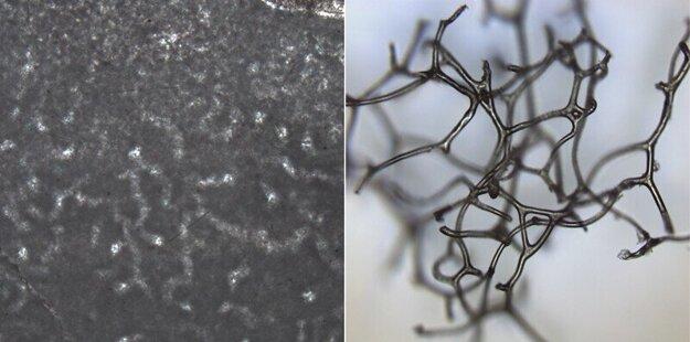 Rúrky, ktoré Turnerová objavila na skalách (vľavo), mohli vzniknúť, keď sa pri skale rozložila hubka pred 890 miliónmi rokov. Štruktúry sa ponášajú na moderné hubky (vpravo).
