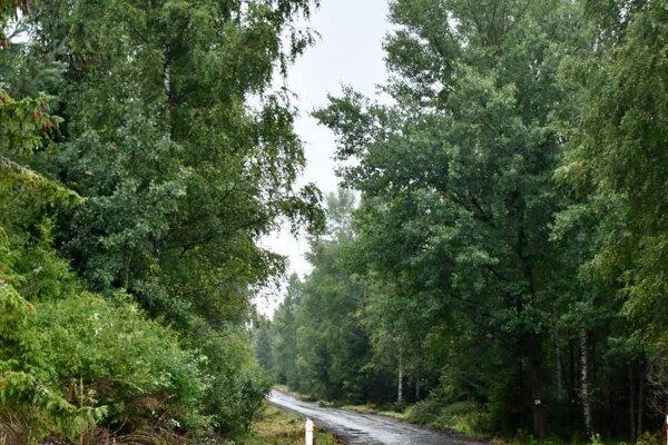 Obnovia lesnú cestu.