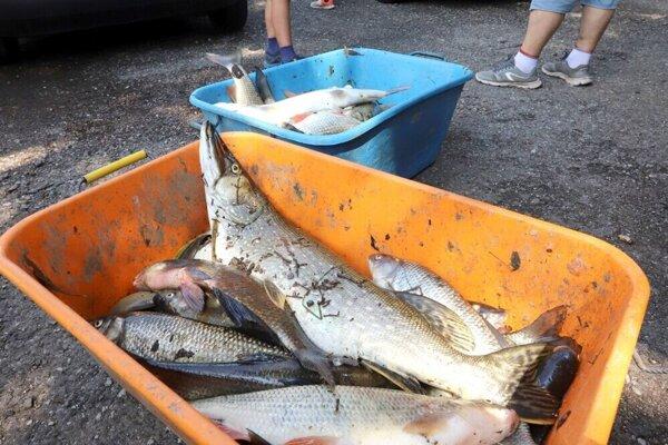Uhynuté ryby z Hrona zlikvidovali v kafilérii. Nahradia ich inými, ktoré daruje MO SRZ Levice.