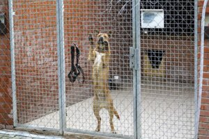 Pes v koterci v Útulku Slobody zvierat na Poliankach v Bratislave.