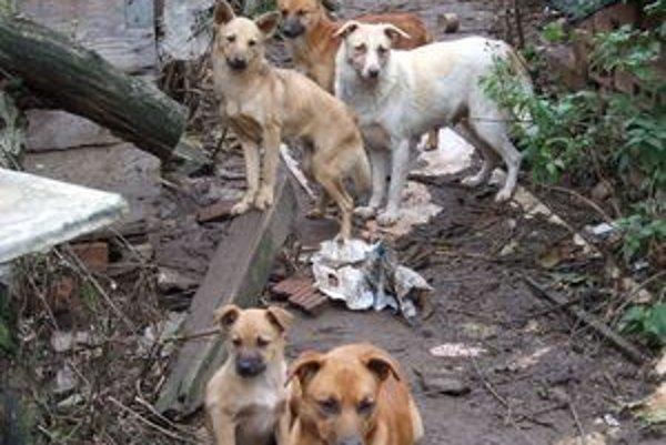 S túlavými psami majú problém takmer v každej dedine. Sloboda zvierat vyzvala starostov, aby nevyužívali služby košických šarhov.