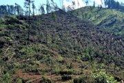 Štyridsať percent z celkového objemu kalamity tvoria zlomy, kde je znehodnotená najkvalitnejšia časť kmeňa. Šesťdesiat percent tvoria vývraty. Lesníci o tom informovali krátko po kalamite.