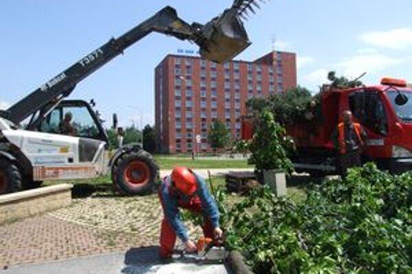 Stromy vyrúbali na oboch stranách rieky. Rástli na miestach, kde sa bude nový most napájať na cestu.