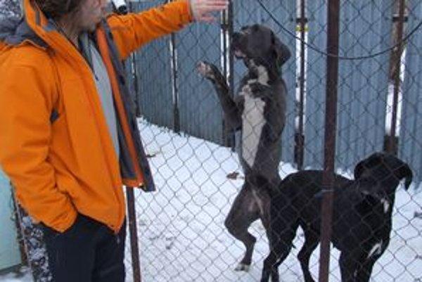 Ivan Inštitoris s dogami, ktoré voľne behali ulicami Nitry.