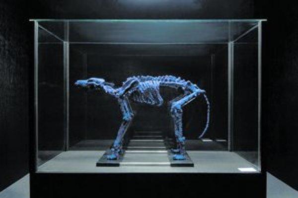 Dielo Aj po smrti krásny tvorí kostra psa kompletne pokrytá modrými korálikmi.