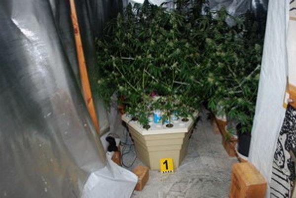 Policajti zaistili 83 kilogramov marihuany.