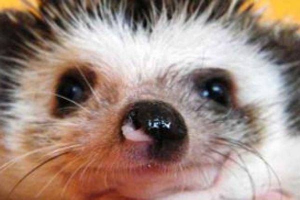 Teranno Fauna predstaví aj ježkov bielobruchých.