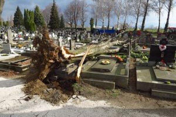 Stará lipa spustošila desať hrobových miest.