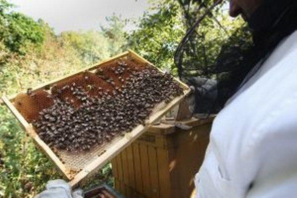 Včelári v regióne ubúdajú.