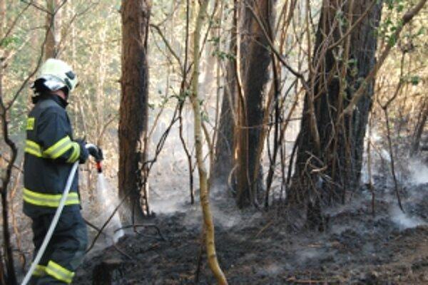 Najviac požiarov vzniklo aj v máji z vypaľovania trávy.