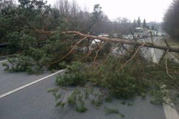Strom nevydržal nápor vetra.