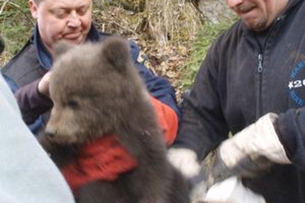 Mladé medvieďa sa zatúlalo k rekreačnej chate. Zachraňovali ho policajti a lesník.