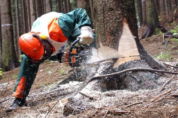 Aj v lesoch na hornej Nitre prebieha ťažba dreva.