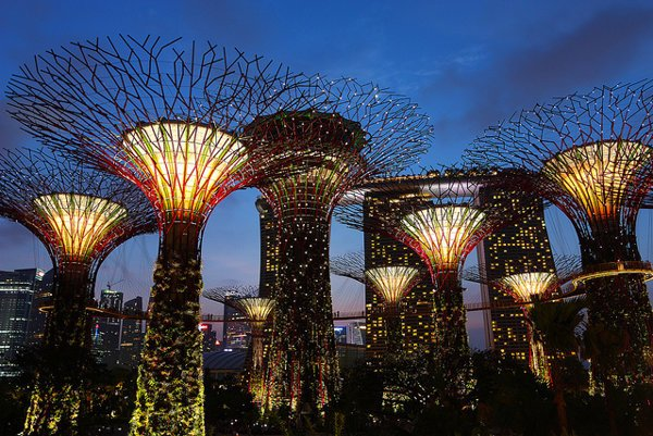 Háj superstromov (Supertrees Grove) v Singapure pôsobí ako z filmu Avatar.