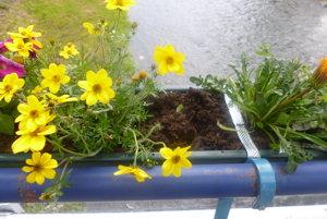 Už o dva dni po vysadení kvety zmizli.