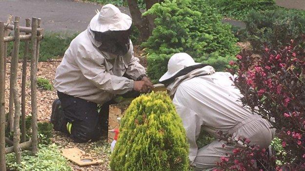 Včelári boli pri manipulácii so včelami opatrní