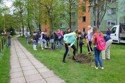 Osemnásť stromov vysadili na Vajanského ulici.