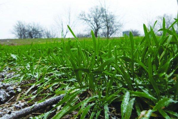 Oziminy sa tento týždeň dočkali potrebnej snehovej prikrývky aj mrazov.