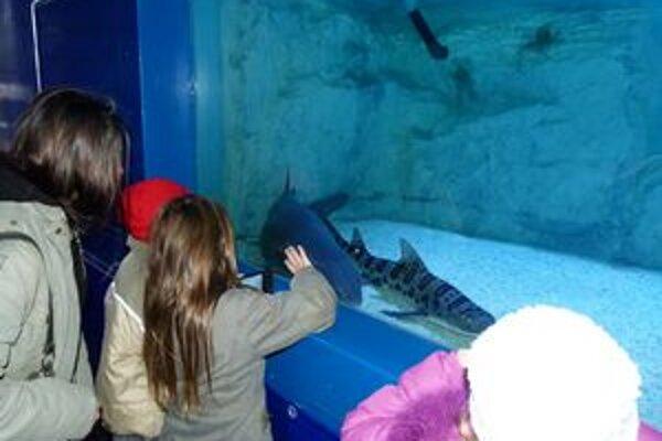 Žraloky na Slovensko z Mexického zálivu doviezol Fabrice Lesieur.