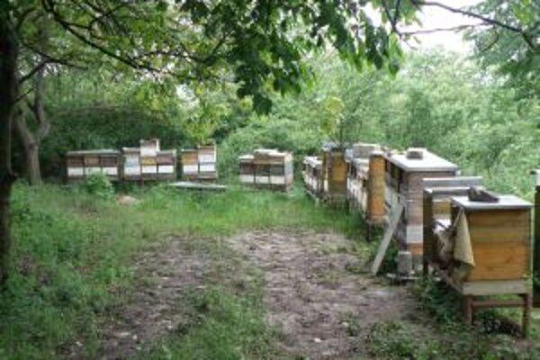 Úle so včelami aj medom miznú.
