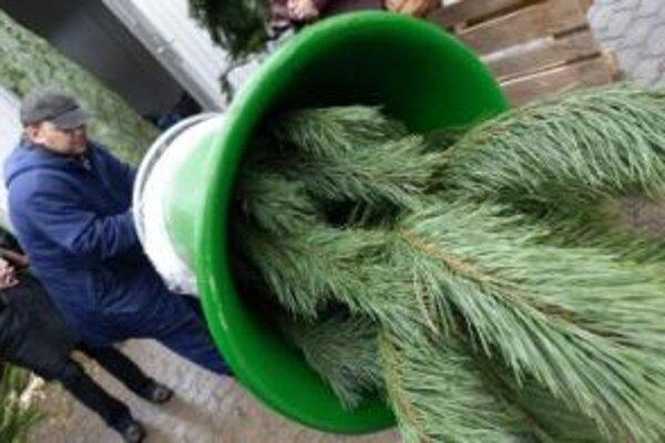 V Senici sa každoročne predá viac ako stovka živých stromčekov.