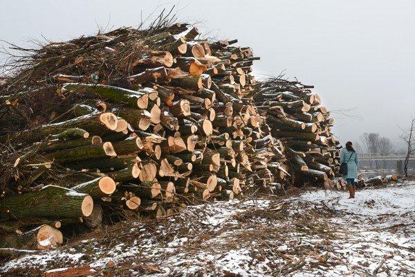 Nahromadené kopy. Podľa posudku ide najmä o vŕby. Kde drevo skončí, nevedno.