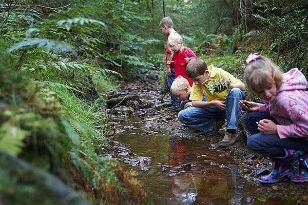 Sosna chce deti pritiahnuť do lesa.