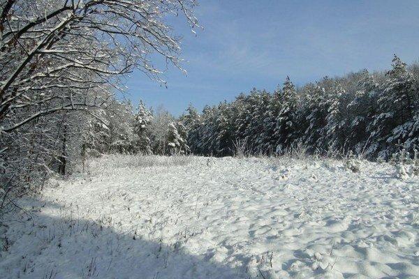 Iba niekoľko metrov od košického sídliska sa návštevníkom naskytli takéto pohľady na zasneženú prírodu.