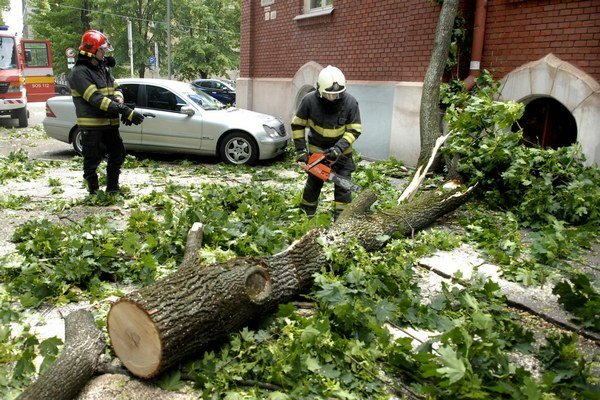Silný vietor vyvrátil strom s koreňmi.