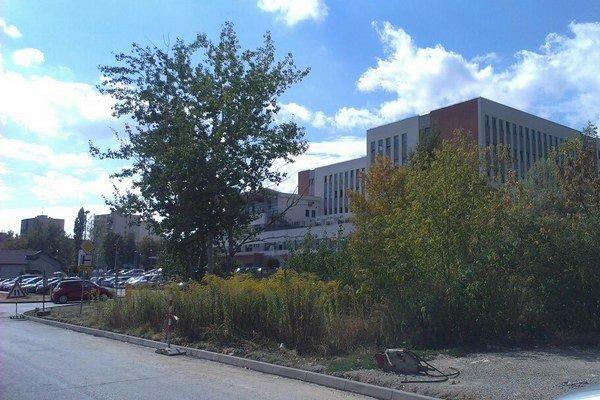 Časť nevyužívaného pozemku. Ak ho nemocnica predá kardioústavu, vznikne tam parkovisko.