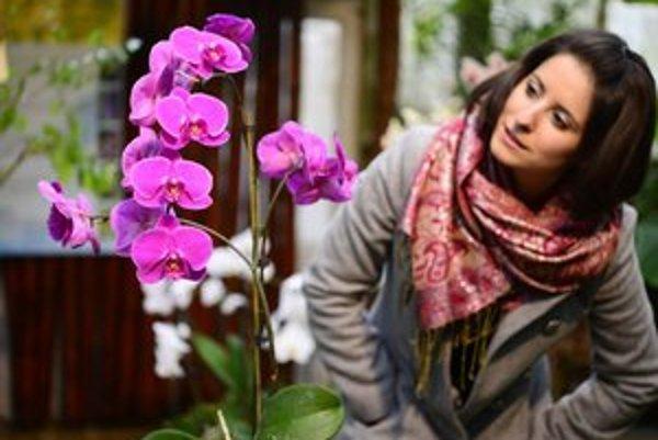 Krása orchideí návštevníkov fascinovala už počas minulých ročníkov výstavy.