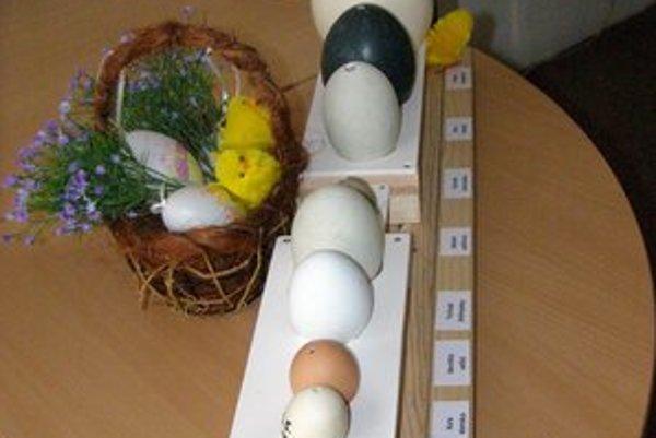 Výstavka. Uvidíte vajíčka od andulky až po pštrosa afrického.
