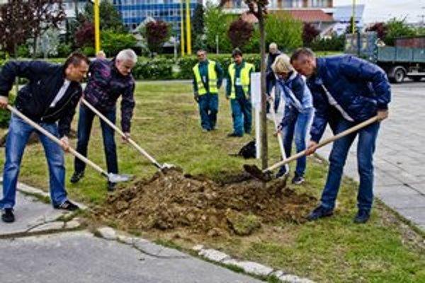 Prvých dvadsať stromov v rámci projektu KESA vysadili v máji pred magistrátom.
