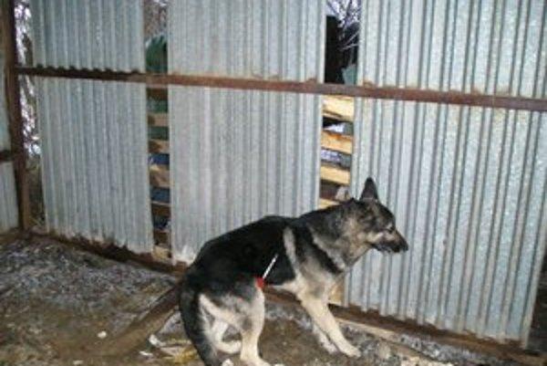 Veľkých psov treba uspať narkotizačnou injekciou.