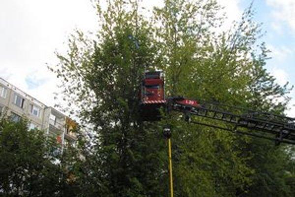 Včelár v akcii. Pomohla hasičská plošina.