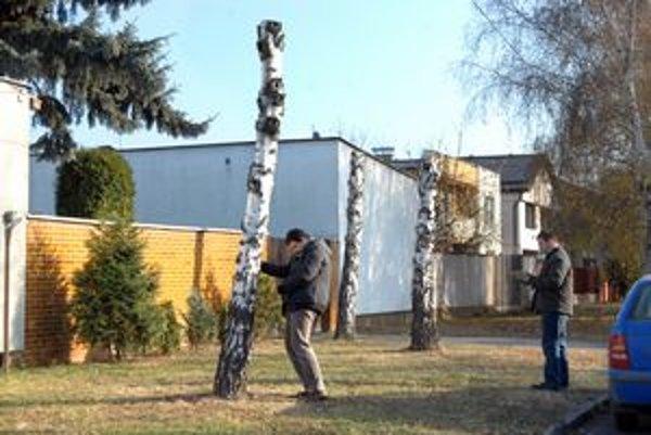 Orezané stromy na Jenisejskej ulici.