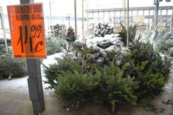 Ihličnany sú nachystané. Stačí si len vybrať. Vianočný strom z dovozu alebo z mestských lesov. Ponuka je široká.