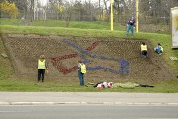 Hokejový záhon. Vytvoria ho zo 4 500 kvetov.