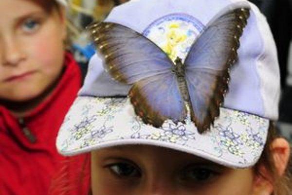 Výstava tropických motýľov sa v Košiciach teší obľube.