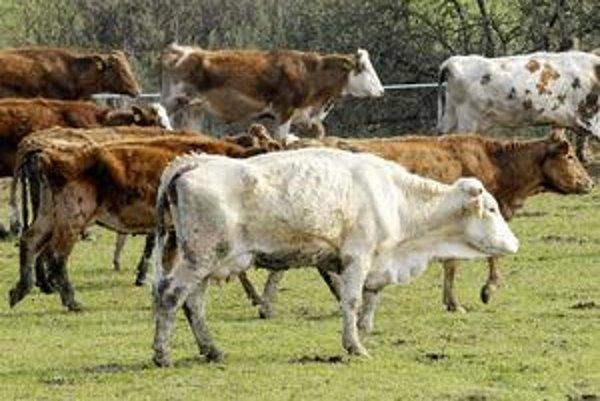 Lúka pri Janíku. Na jar 2007 tu v blate zomierali vychudnuté zvieratá. Podľa súdu za to majiteľ firmy nemohol.