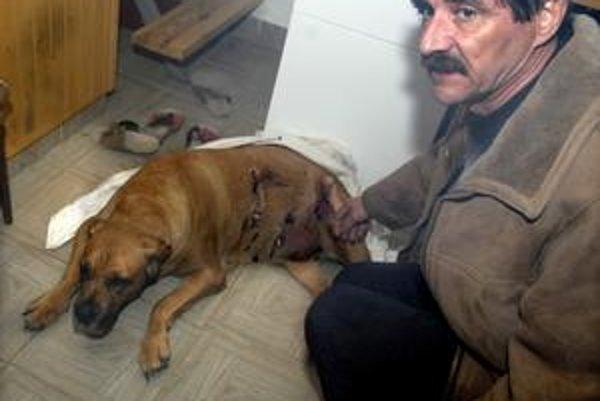 Hrôza. Diviak sa so psom nemaznal. Anes roztrhal takmer polovicu tela.