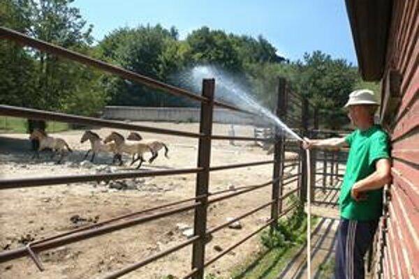 """Prší aspoň z hadice. Taká horúčava je aj na """"koňa"""" veľa."""