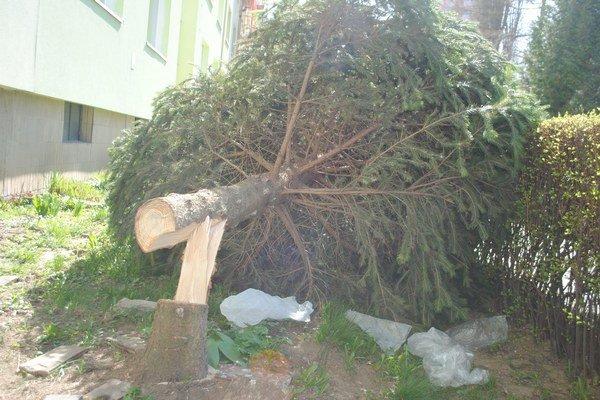 Zrezaný strom. Stále leží pred bytovkou.