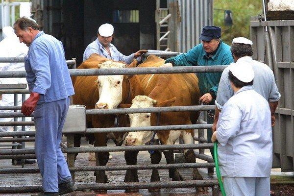Veterinárna kontrola. Ročne preveria až 300 exportov.