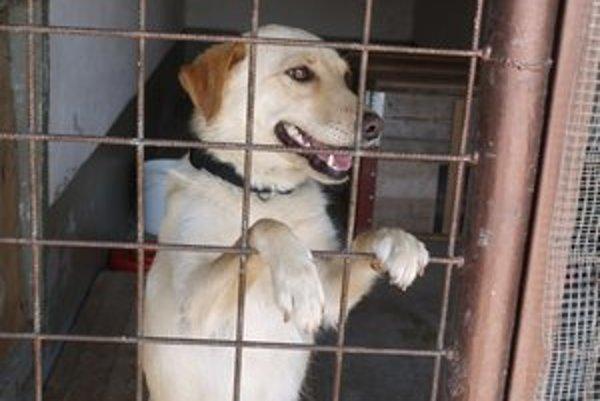 Obce by zaplatili iba za psa, ktorý by bol odchytený na ich území.