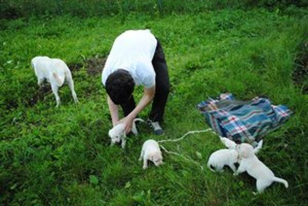 Psy v horúčavách. Zvýšenú pozornosť treba venovať šteňatám a starším.
