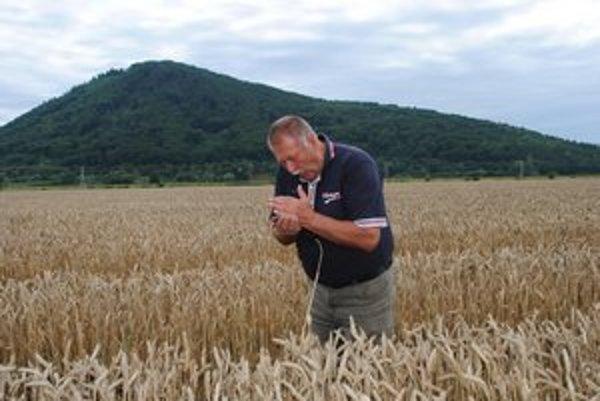 Hospodár Štefan Bačišin. Pred žatvou kontroloval kvalitu pšenice, mala dosť vlhkosti aj lepku.