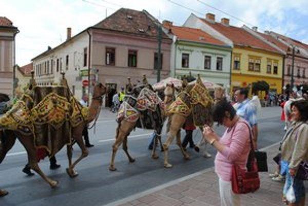 Takto sa prechádzali ťavy po Prešove.