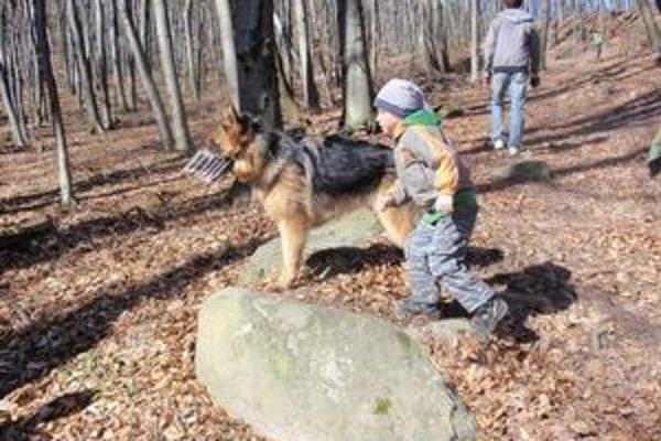 Psy potrebujú výbeh. Vo Svidníku chýbajú aj venčoviská.